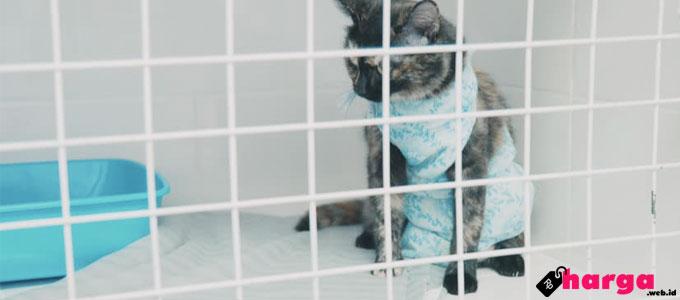Kucing Didalam Kandang - (Sumber: shutterstock.com)