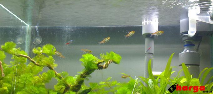 Tabung CO2 untuk Aquascape - pionersa.blogspot.com