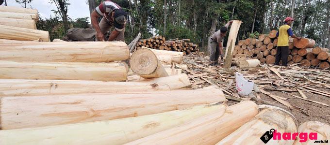 kayu sengon - beritadaerah.co.id