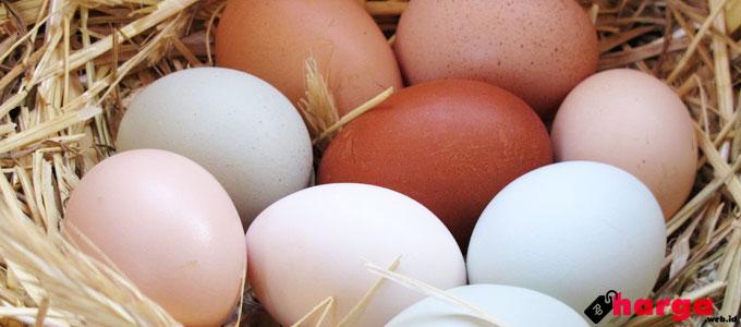 Diklaim Memiliki Manfaat Lebih, Telur Omega 3 Dijual Dengan Kisaran Harga Rp 12.000 per 10 Butir