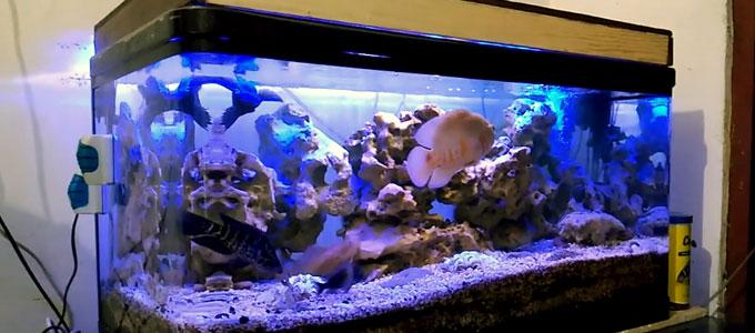 Update Daftar Harga Aquarium Nisso Di Pasaran Daftar Harga Tarif