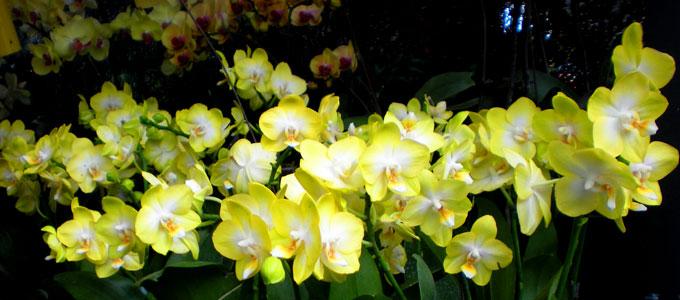 Update Harga Bunga Anggrek Bulan Di Pasaran Daftar Harga Tarif