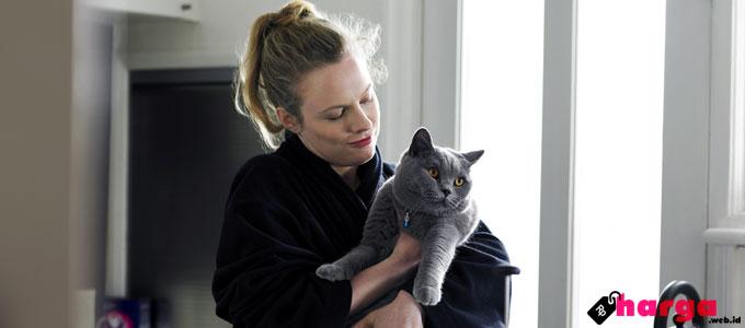 Kucing, betina, steril, sterilisasi, proses, metode, populasi, jantan, biaya, dokter, klinik, kesehatan, gratis, program, operasi, kebiri, recovery