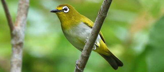 Info Lengkap Jenis Dan Harga Burung Pleci Termahal Daftar Harga Tarif