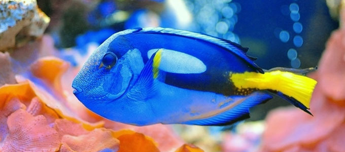 Update Ciri Khas dan Harga Ikan Dori di Pasaran | Daftar Harga & Tarif