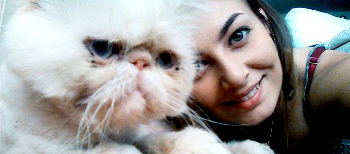 Info Terbaru Harga Jual Kucing Persia Saat Ini Daftar